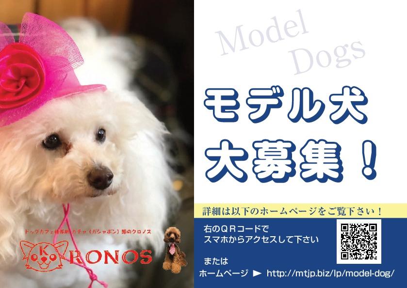 モデル犬大募集!